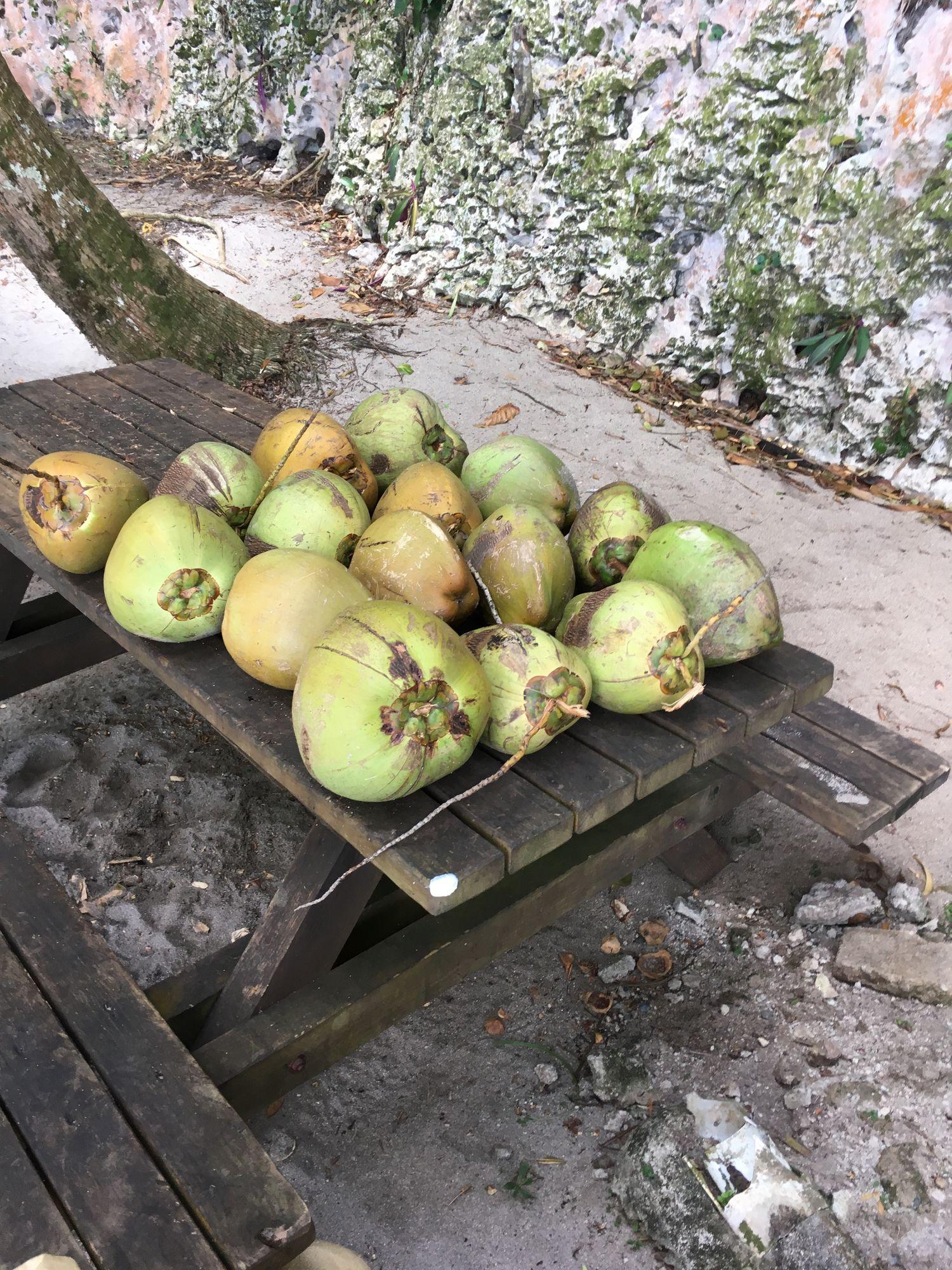 Noix de coco - Parc national de Los Haitises